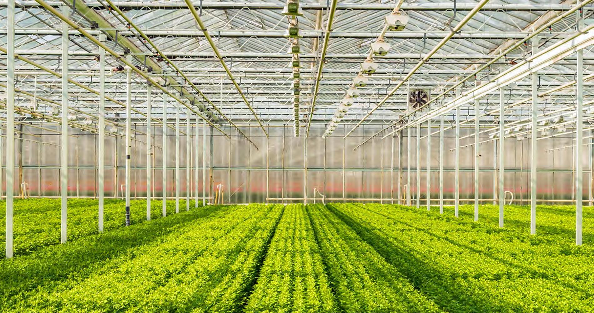 Fertilizzazione e Irrigazione